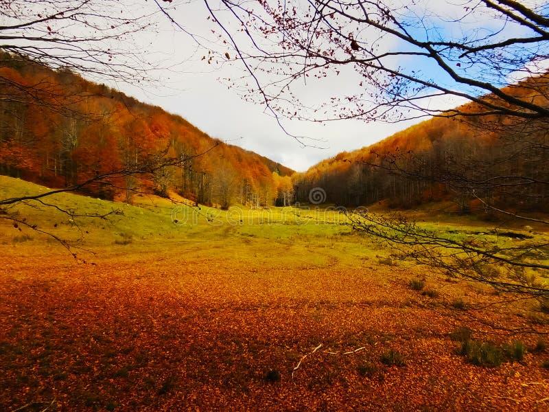 Opinião do outono do pinhos e floresta das faias em uma montanha fotos de stock royalty free
