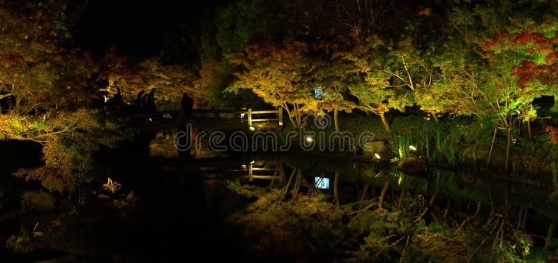 A opinião do panorama da árvore da folha de bordo ilumina acima a mostra foto de stock