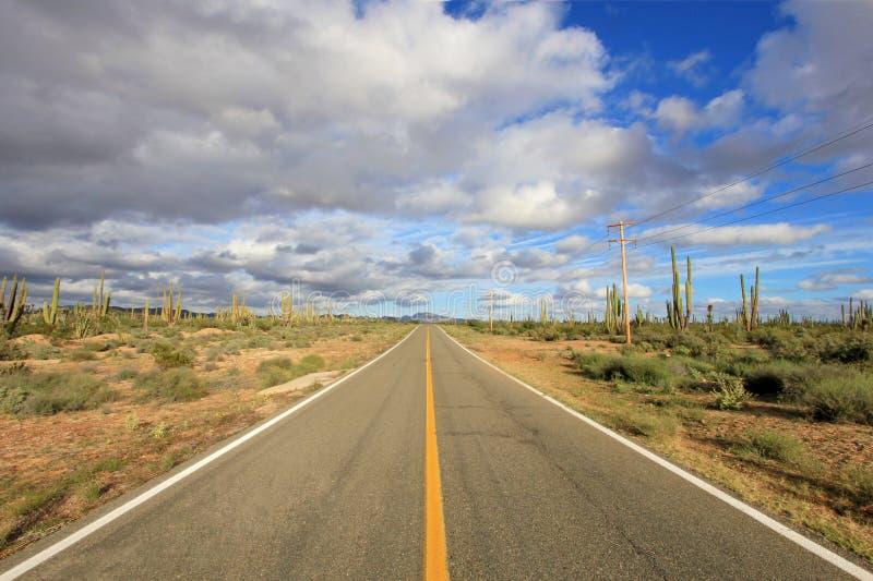 Opinião do panorama de uma estrada reta infinita que corre com uma grande paisagem do cacto de Cardon do elefante em Baja Califor fotografia de stock royalty free