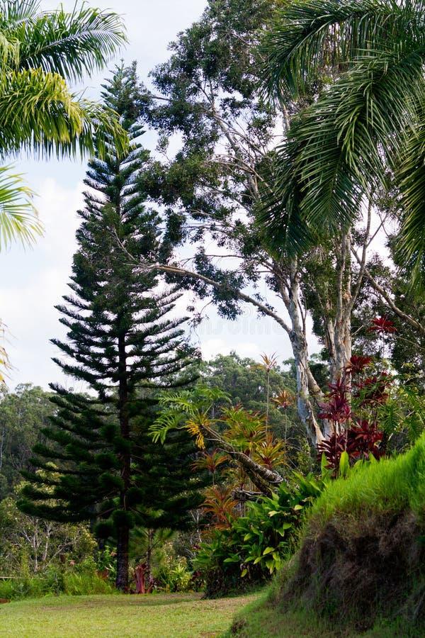 Opinião do parque de Maui na estrada a Hanna foto de stock royalty free