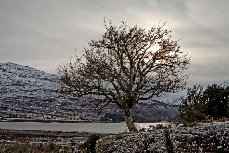 Opinião do por do sol de uma árvore em Scotland fotos de stock royalty free