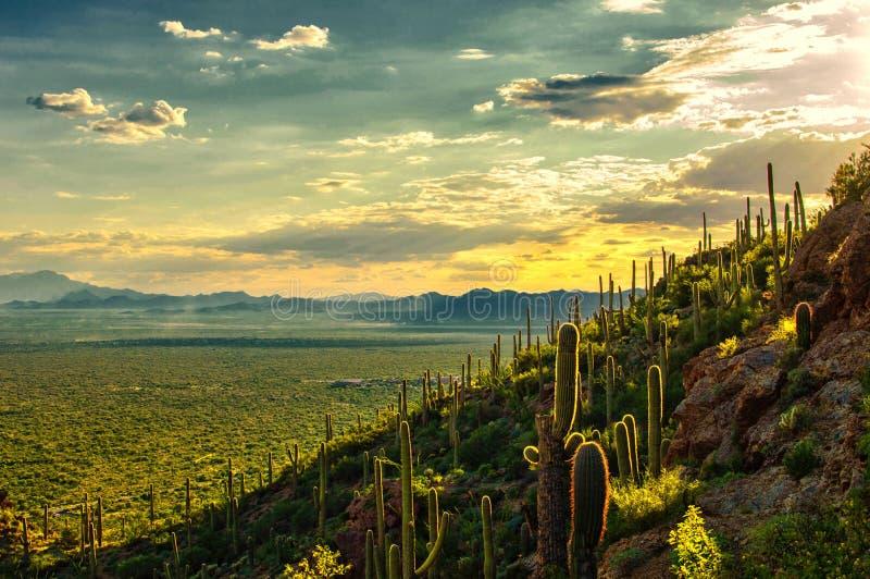 Opinião do por do sol do deserto de Sonoran do parque da montanha de Tucson, Tucson AZ foto de stock