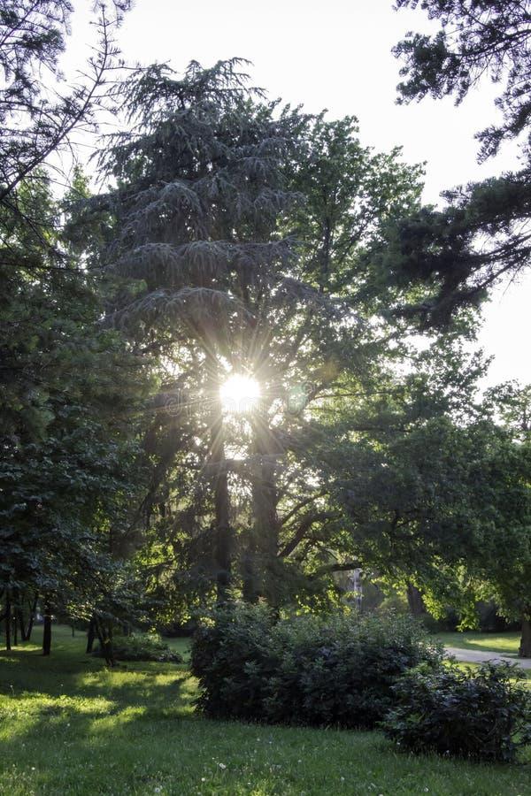 Opinião do por do sol no parque foto de stock