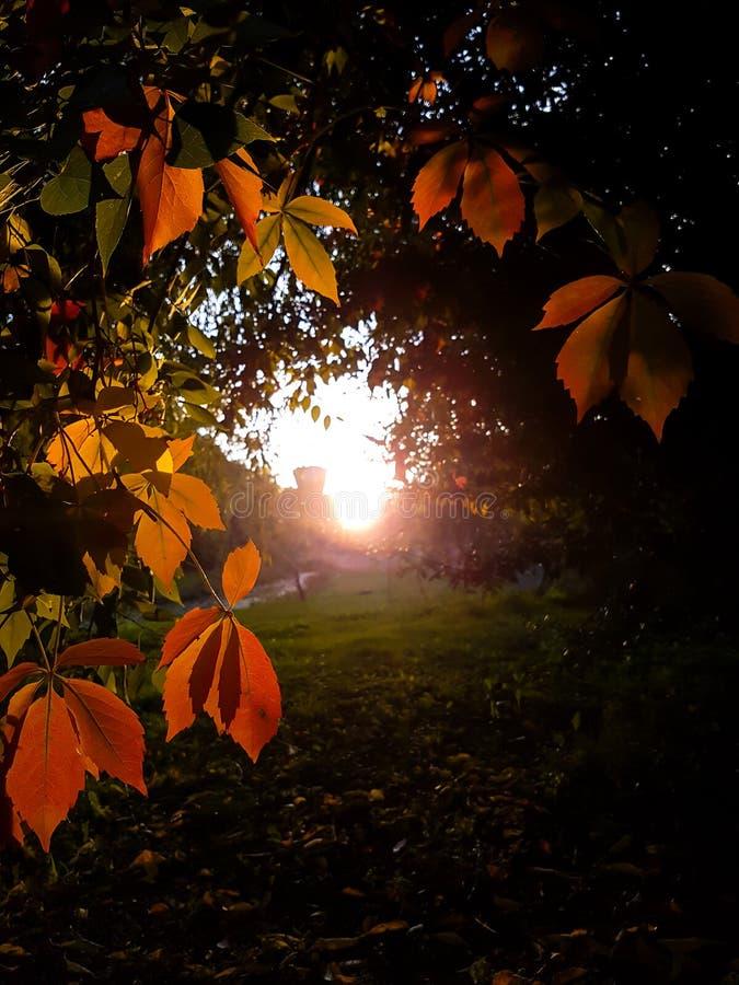 Opinião do por do sol do verão imagem de stock
