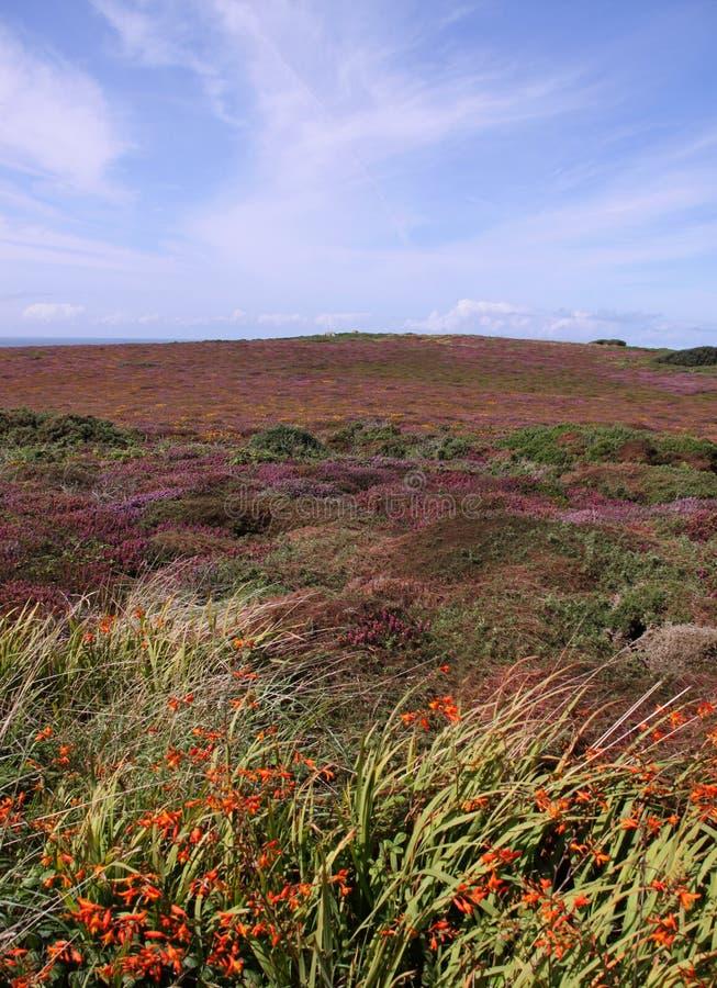Opinião do prado do campo das flores e das plantas fotografia de stock royalty free