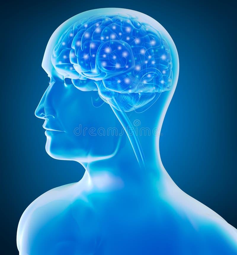 Opinião do raio X do cérebro humano ilustração do vetor