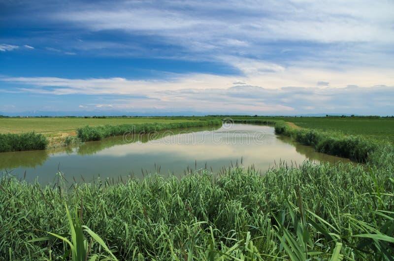 Opinião do verão de um rio quieto na planície Venetian fotografia de stock