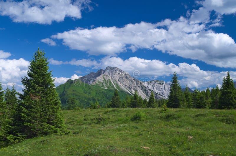 Opinião do verão dos cumes perto de Sappada imagem de stock royalty free