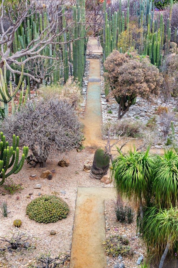 Opinião do vertical do jardim de Oaxaca Ethnobotanical imagens de stock