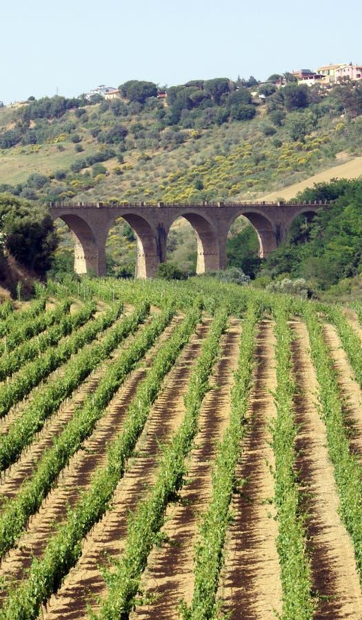Opinião do Vinery e da ponte imagem de stock royalty free