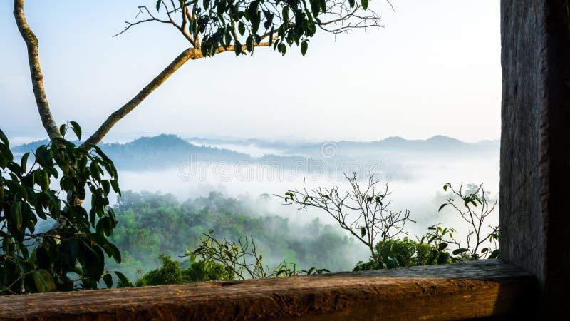 Opinião enevoada da selva da casa na árvore fotografia de stock royalty free