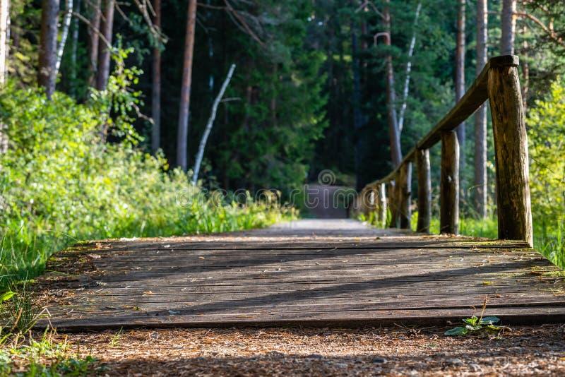 Opinião Forest Road, direção mais profunda nas madeiras imagens de stock