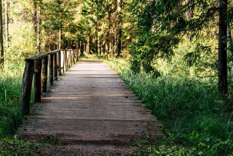 Opinião Forest Road, direção mais profunda nas madeiras fotografia de stock royalty free