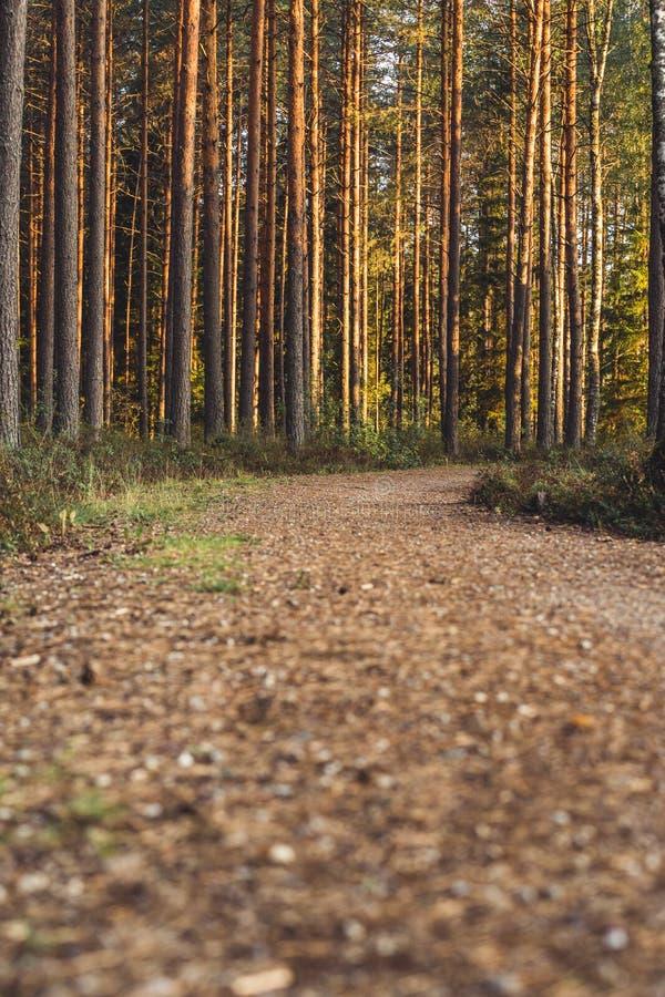 Opinião Forest Road, direção mais profunda nas madeiras em Sunny Summer Day, imagem em parte borrada com espaço livre para o text imagem de stock royalty free