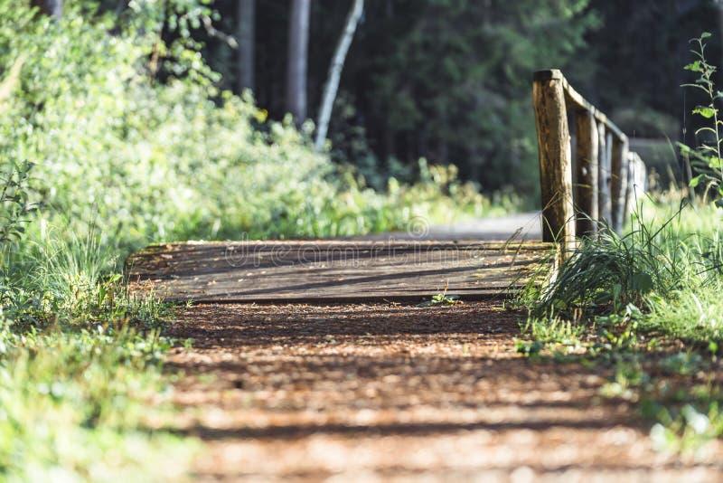 Opinião Forest Road, direção mais profunda nas madeiras em Sunny Summer Day, imagem em parte borrada com espaço livre para o text fotos de stock