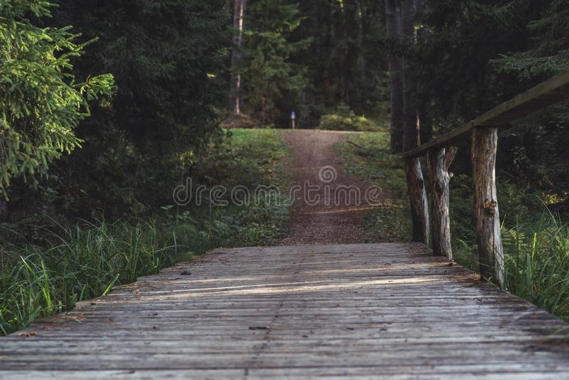 Opinião Forest Road, direção mais profunda nas madeiras em Sunny Summer Day, imagem em parte borrada com espaço livre para o text imagens de stock