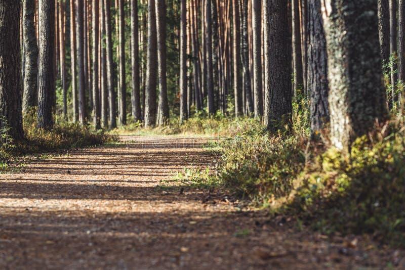 Opinião Forest Road Tourist Hiking Path, direção mais profunda nas madeiras em Sunny Summer Day, imagem em parte borrada com livr imagens de stock royalty free