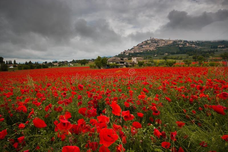 Opinião histórica da vila do Trevi do campo bonito da estação vermelha das papoilas na primavera fotografia de stock royalty free