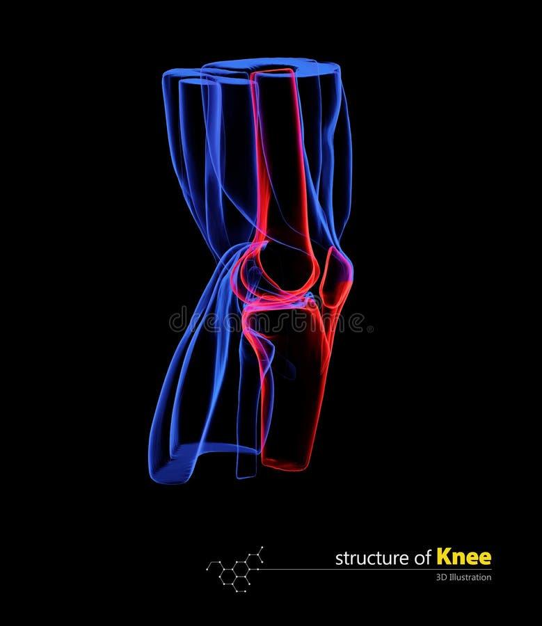 A opinião humana da anatomia do joelho isolou o preto, ilustração 3d imagem de stock royalty free