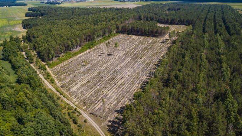 Opinião ilegal do desflorestamento do zangão foto de stock