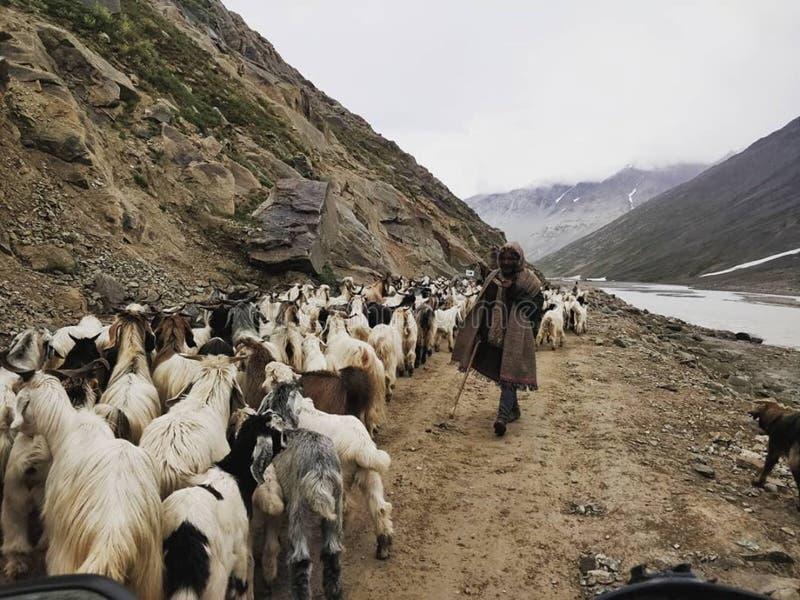 Opinião indiana do rio da montanha dos animais foto de stock royalty free