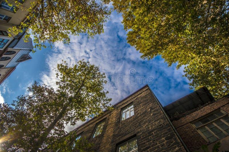 Opinião inferior com a árvore no lado, opinião da construção de pedra do céu da rua, Baku, Azerbaijão foto de stock