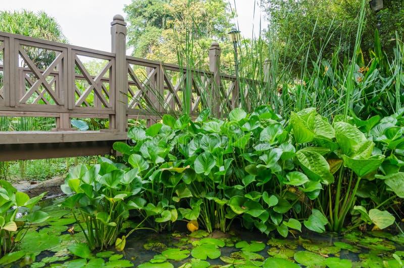 Opinião Kuala Lumpur Perdana Botanical Gardens, Malásia de ponte de madeira foto de stock royalty free