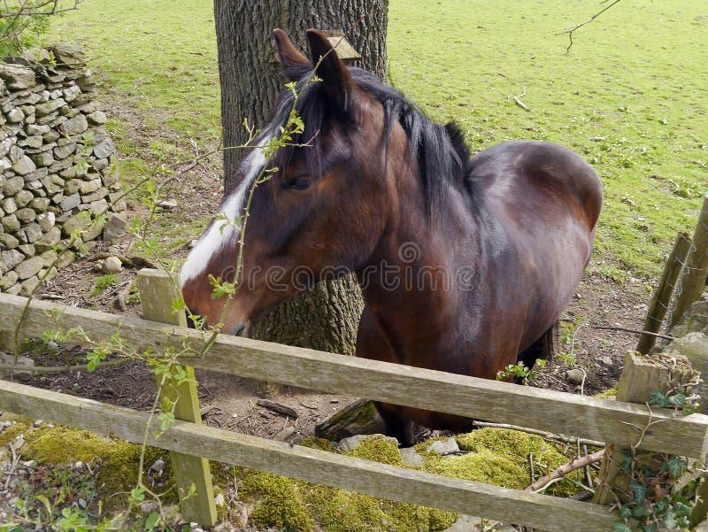 Opini?o lateral do cavalo pela cerca imagens de stock royalty free