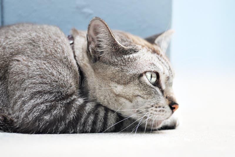 Opinião lateral do gato imagens de stock