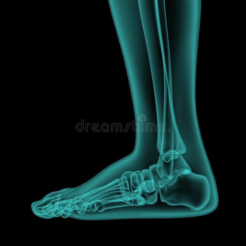 Opinião lateral do raio X do pé humano e do tornozelo ilustração do vetor