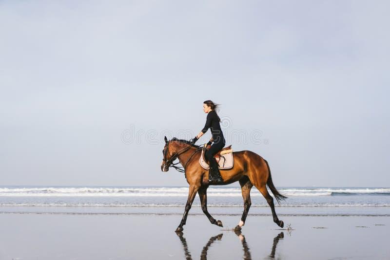 opinião lateral o cavalo de montada equestre fêmea novo em arenoso imagens de stock