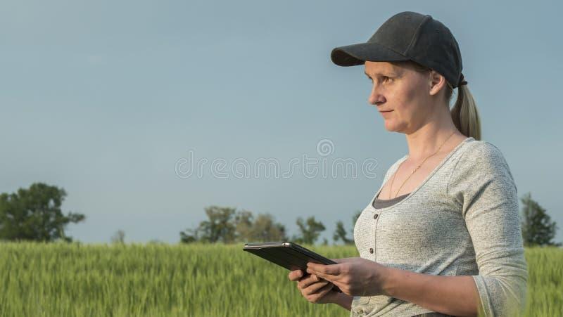 A opini?o lateral o fazendeiro da mulher com tabuleta est? ? disposi??o no campo de trigo verde fotos de stock royalty free