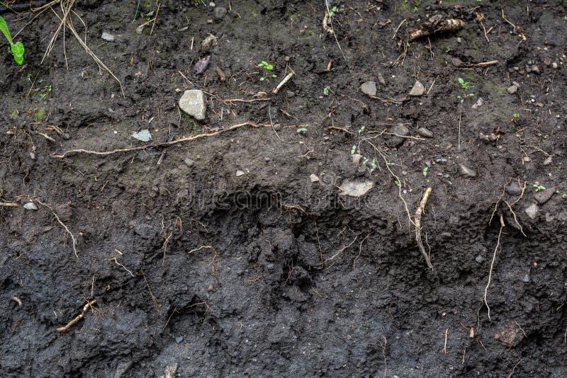 Opinião lateral subterrânea do solo sujo foto de stock