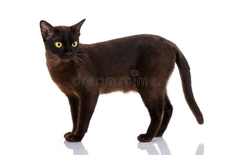 Opinião lateral um gato preto isolado no branco foto de stock