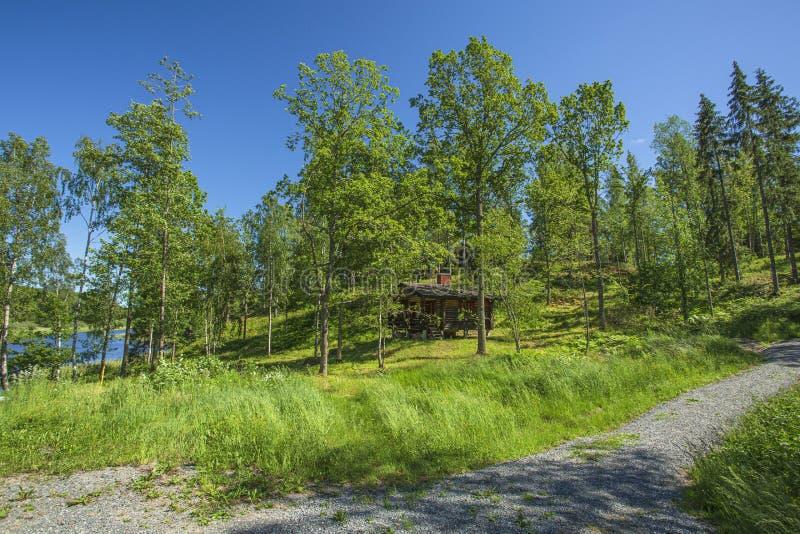 Opinião lindo da paisagem da natureza no dia de verão ensolarado Árvores e plantas verdes em torno do lago no fundo do céu azul fotografia de stock royalty free