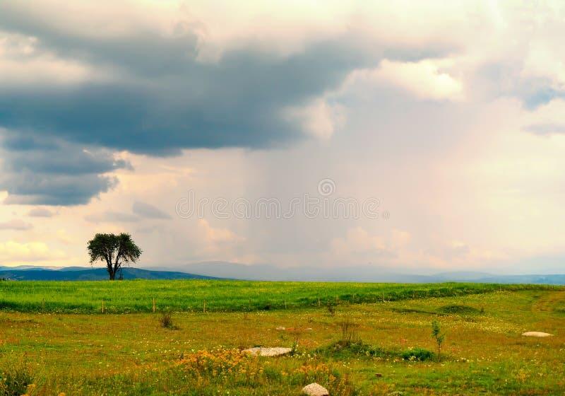 Opinião lisa verde da árvore e do céu no peru fotos de stock royalty free