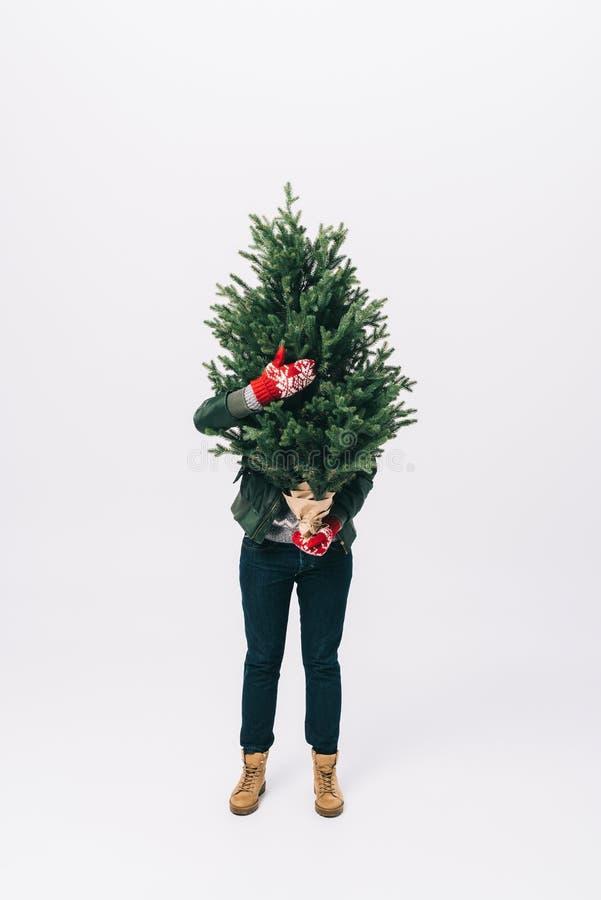 opinião obscurecida a pessoa na camiseta e nos mitenes do inverno que guardam a árvore de abeto nas mãos isoladas no branco imagens de stock royalty free