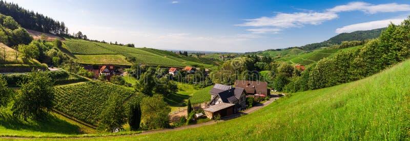Opinião panorâmico da paisagem dos alugueres largos do vale do vinhedo da Floresta Negra fotografia de stock royalty free
