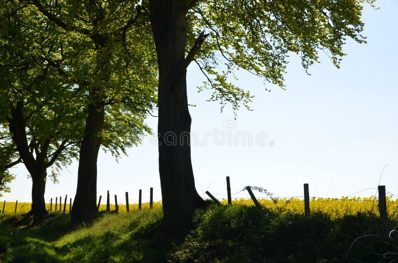 Opinião rural do campo imagem de stock royalty free
