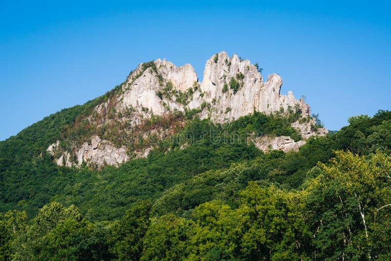 Opinião Seneca Rocks, na floresta nacional de Monongahela, West Virginia foto de stock royalty free