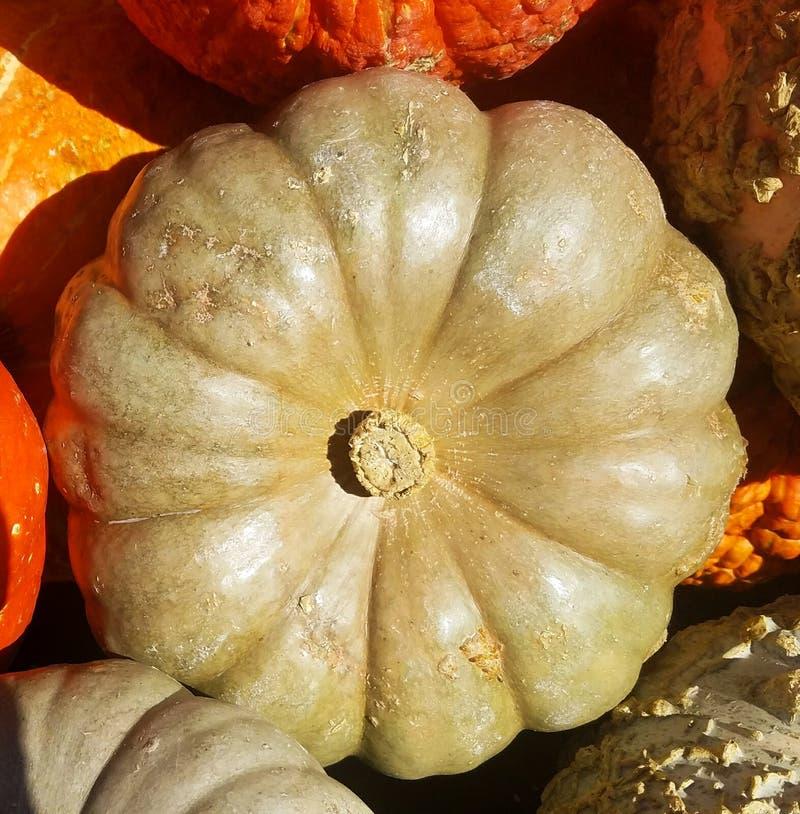 Opinião superior Amarelo-dourada de Cinderella Pumpkin imagem de stock royalty free
