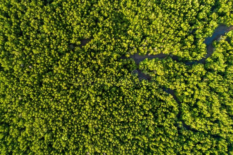 Opinião superior da floresta aérea dos manguezais foto de stock royalty free
