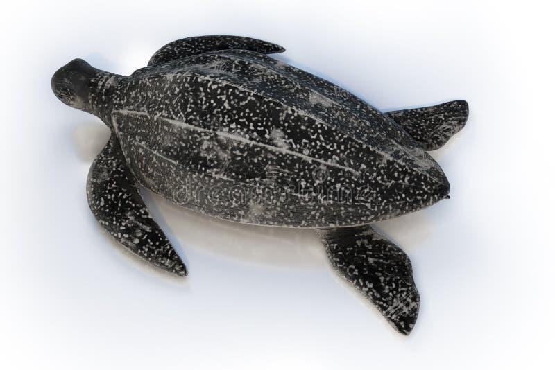 opinião superior da rendição 3d da tartaruga de Leatherback ou do coriacea de Dermochelys, isolada no fundo branco, trajetos de g ilustração royalty free
