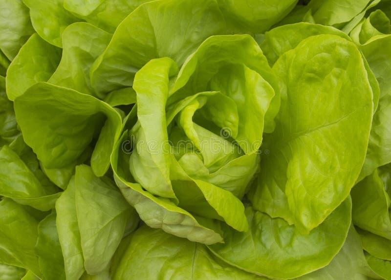 Opinião superior do alimento saudável verde fresco do salat da alface imagens de stock royalty free