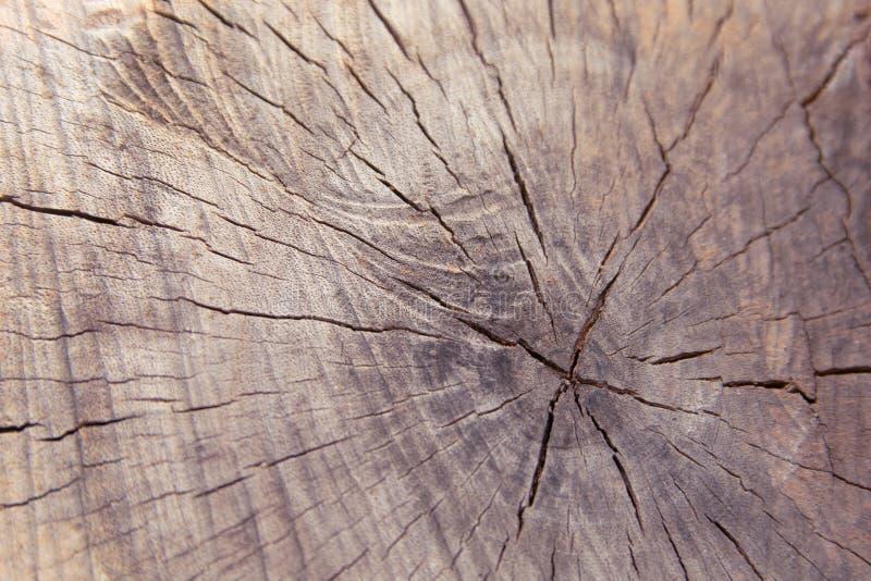 Opinião superior do fundo da textura do coto do tronco de árvore fundo da quebra do coto de árvore imagem de stock royalty free