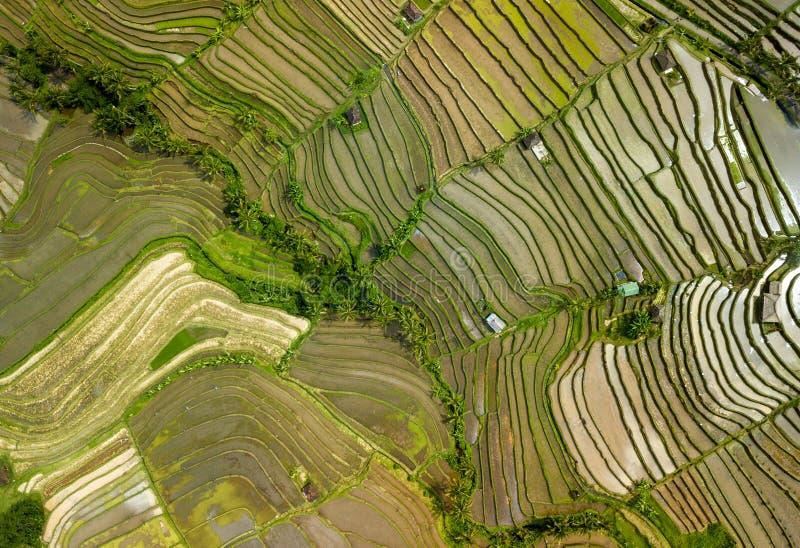 Opinião superior do tiro aéreo do ricefield de Bali fotos de stock royalty free