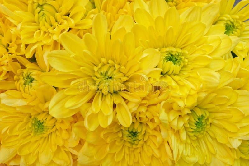 Opinião superior dos crisântemos amarelos coloridos, fundo sem emenda natural fotos de stock royalty free