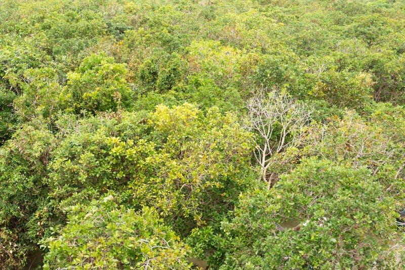 Opinião superior manguezais verdes como um fundo imagem de stock royalty free