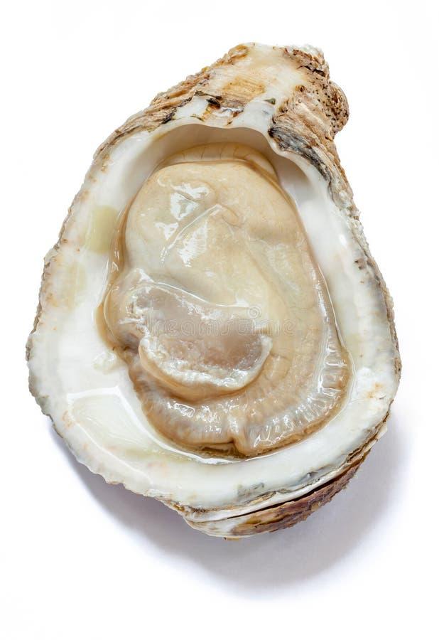 A opinião superior a ostra fresca crua do mar, prepara-se ao servido imagem de stock