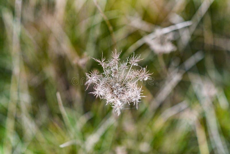 Opinião superior secada outonal de grama selvagem imagens de stock
